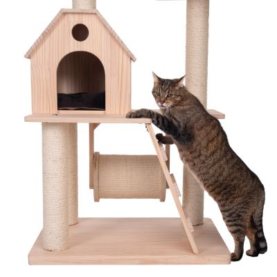 Kitty's Home Scratching Tree