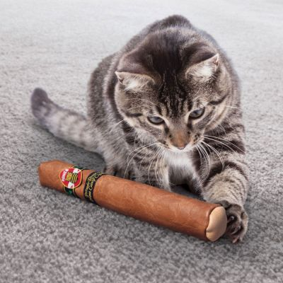 KONG Cat Better Buzz Cigar brinquedo para gatos