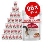 Lot de sachets fraîcheur pour chat Royal Canin 96 x 85 g