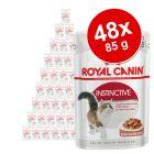 Lot de sachets fraîcheur Royal Canin 48 x 85 g pour chat