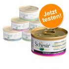 Lot mixte Schesir 6 x 70 g / 75 g / 85 g pour chat