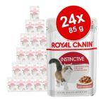 Lot mixte 24 x 85 g Royal Canin en gelée et en sauce