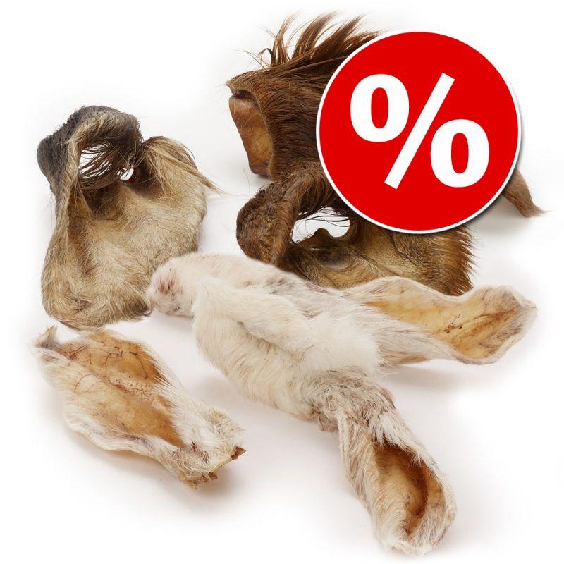 Lot Oreilles à mâcher Wolf of Wilderness pour chien