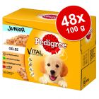 Megapakiet Pedigree Junior Saszetki, 48 x 100 g