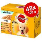 Megapakiet Pedigree Junior Saszetki, 48 x 100 g