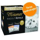 Miešané balenie Miamor Ragú Royale Kitten v želé 12 x 100 g