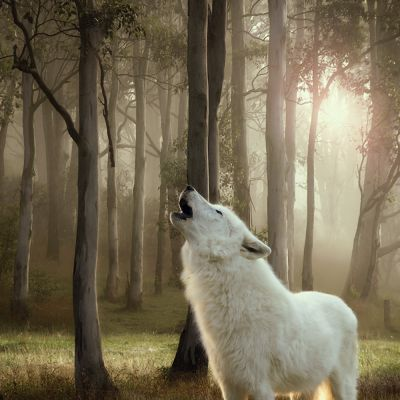 "Mieszany pakiet próbny Wolf of Wilderness ""The Taste Of"