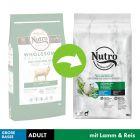 Nutro Adult Dog 30 kg+ Miel & orez