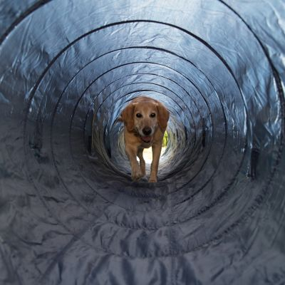 Outdoor Trixie Agility Tunnel
