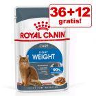 36 + 12 på köpet! 48 x 85 g Royal Canin kattmat