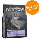 Pachet de testare Briantos fără cereale 2 x 1 kg