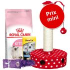 Pack malin spécial chaton : Royal Canin Kitten + accessoires