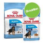 Pack bi-nutrition : croquettes + sachets Royal Canin Maxi pour chien