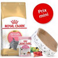 Pack malin Royal Canin British Shorthair pour chaton