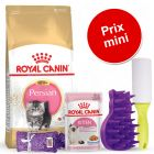 Pack malin Royal Canin Persian pour chaton