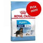 Pack transition : Croquettes Royal Canin Size à prix mini !