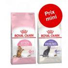 Pack transition : Royal Canin pour chaton et chat adulte à prix mini !