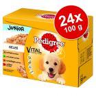Pakiet Pedigree Junior Saszetki, 24 x 100 g