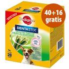 Pedigree Dentastix Fresh 56 uds. en oferta: 40 + 16 ¡gratis!