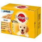 Pedigree Junior Porsjonsposer - Multipakke
