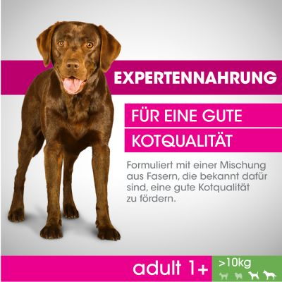 Perfect Fit Adult Hond (>10 kg)