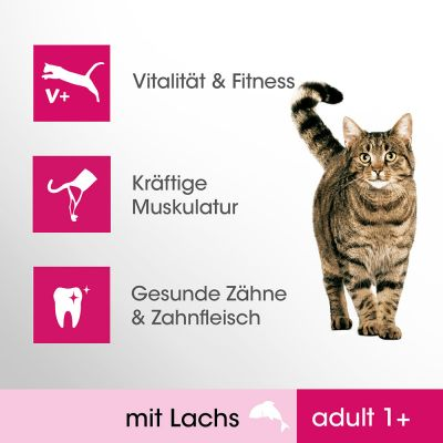 Perfect Fit Adult 1+ Riche en saumon pour chat
