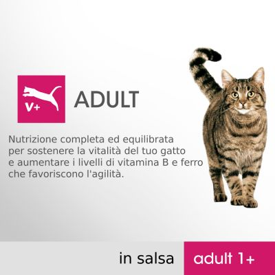 Perfect Fit Adult 1+ selezione mista