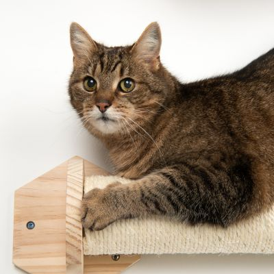 Phoebe Wall Mounted Scratch Post