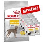 1 pose Royal Canin Care Nutrition + 12 x 85 g vådfoder gratis!