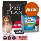 Pro Plan 12 / 14 kg pienso + snacks Purina Dentalife ¡gratis!