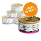 Probierpaket Schesir Varietäten 6 x 70 g / 75 g / 85 g