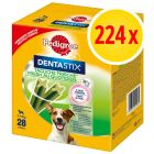 PROMO: Pack 224 uds. Pedigree Dentastix Fresh snacks para perros