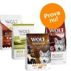 PROVA TILL KANONPRIS: Wolf of Wilderness Adult i blandpack