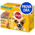Provalo! Pedigree Vital Protection Patè Pollo & Manzo