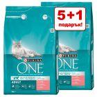 5 + 1 подарък! 6 кг Purina ONE суха храна за котки