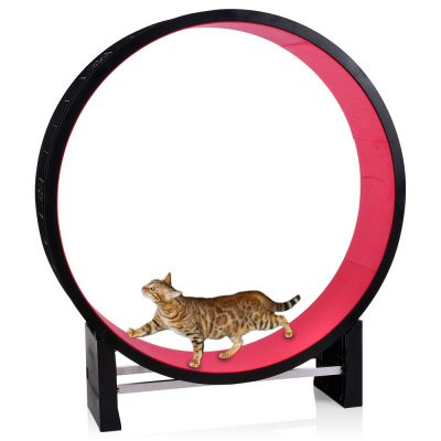 Roue d'exercice Canadian Cat Company pour chat