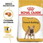 Royal Canin Bouledogue Français Adult