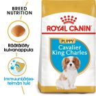 Royal Canin Breed Cavalier King Charles Puppy
