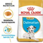 Royal Canin Breed Dalmatian Puppy