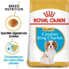 Royal Canin Breed Hondenvoer - Cavalier King Charles Puppy