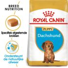 Royal Canin Breed Hondenvoer - Teckel Puppy