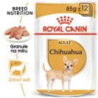 Royal Canin Breed čivava