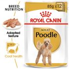 Royal Canin Breed Poodle