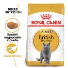 Royal Canin British Shorthair pour chat
