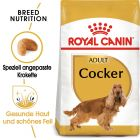 Royal Canin Cocker Adult pour chien