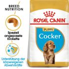 Royal Canin Cocker Junior pour chiot