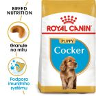 Royal Canin Cocker Puppy