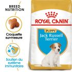 Royal Canin Jack Russell Terrier Puppy pour chiot