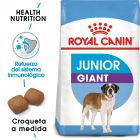 Royal Canin Junior Giant