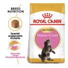 Royal Canin Kitten Maine Coon pour chaton